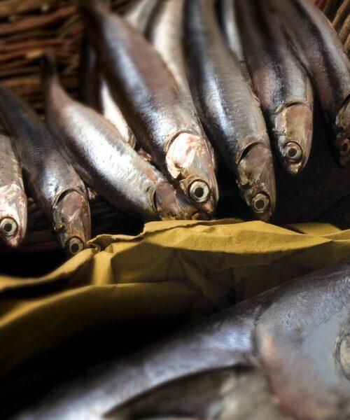 Conserve di Pesce